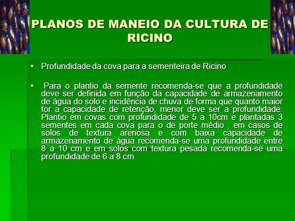 PLANOS DE MANEIO DA CULTURA DE RICINO Profundidade da cova para a sementeira de Ricino Profundidade da cova para a sementeira de Ricino Para o plantio