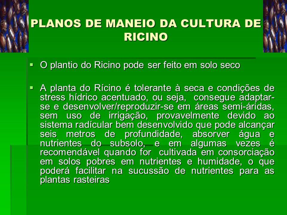 PLANOS DE MANEIO DA CULTURA DE RICINO O plantio do Ricino pode ser feito em solo seco O plantio do Ricino pode ser feito em solo seco A planta do Ríci
