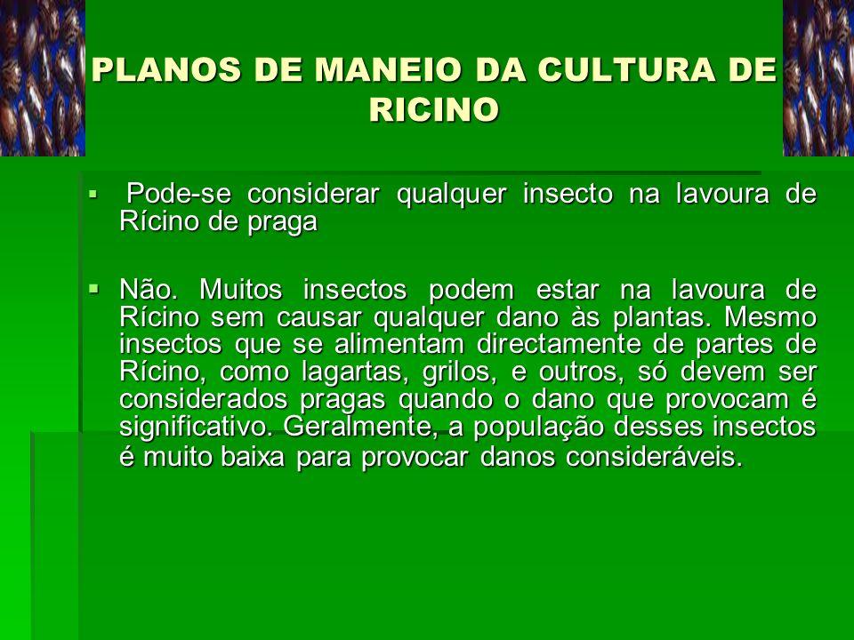 PLANOS DE MANEIO DA CULTURA DE RICINO Pode-se considerar qualquer insecto na lavoura de Rícino de praga Pode-se considerar qualquer insecto na lavoura
