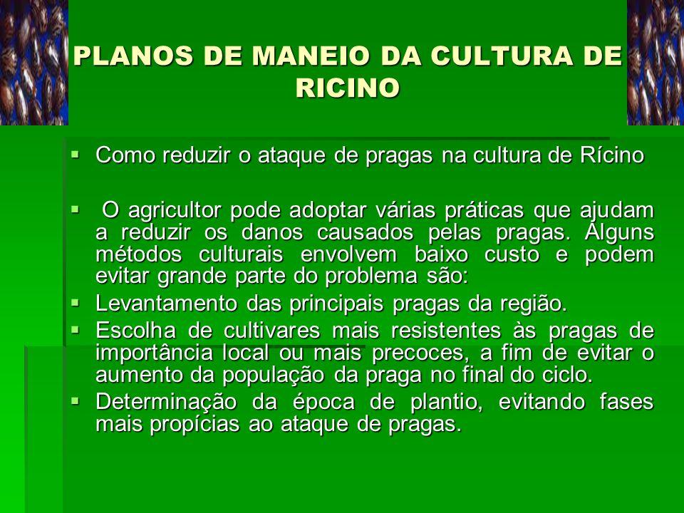 PLANOS DE MANEIO DA CULTURA DE RICINO Como reduzir o ataque de pragas na cultura de Rícino Como reduzir o ataque de pragas na cultura de Rícino O agri