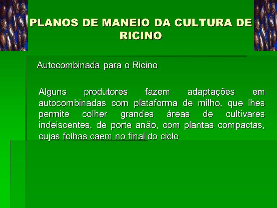 PLANOS DE MANEIO DA CULTURA DE RICINO Autocombinada para o Ricino Autocombinada para o Ricino Alguns produtores fazem adaptações em autocombinadas com