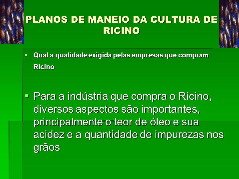 PLANOS DE MANEIO DA CULTURA DE RICINO Qual a qualidade exigida pelas empresas que compram Ricino Qual a qualidade exigida pelas empresas que compram R