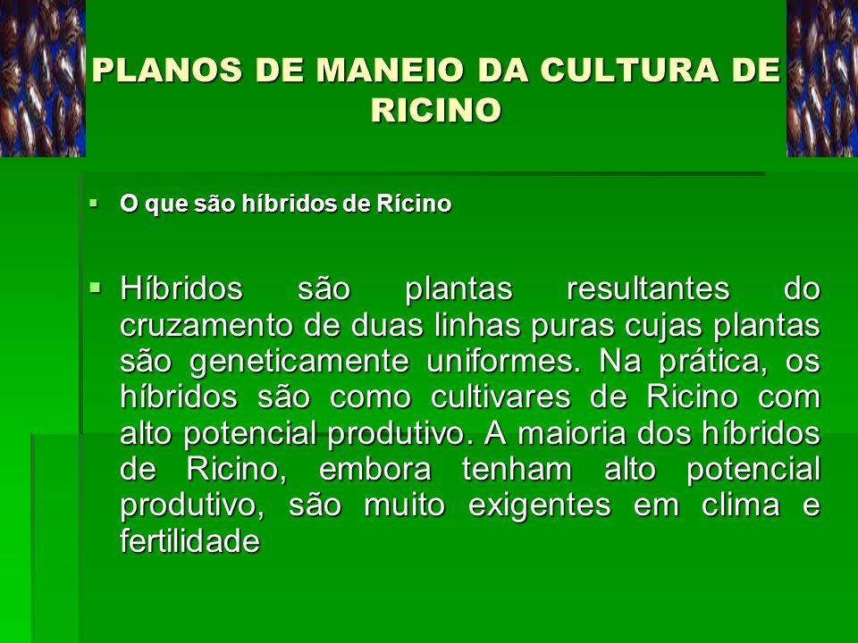PLANOS DE MANEIO DA CULTURA DE RICINO O que são híbridos de Rícino O que são híbridos de Rícino Híbridos são plantas resultantes do cruzamento de duas