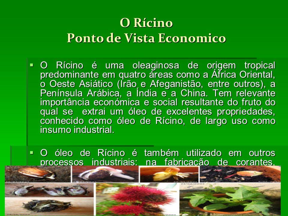 O Rícino Ponto de Vista Economico O Rícino é uma oleaginosa de origem tropical predominante em quatro áreas como a África Oriental, o Oeste Asiático (