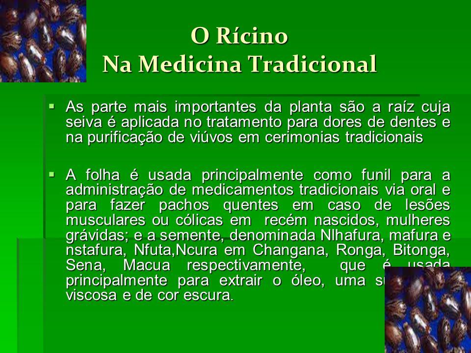O Rícino Na Medicina Tradicional As parte mais importantes da planta são a raíz cuja seiva é aplicada no tratamento para dores de dentes e na purifica