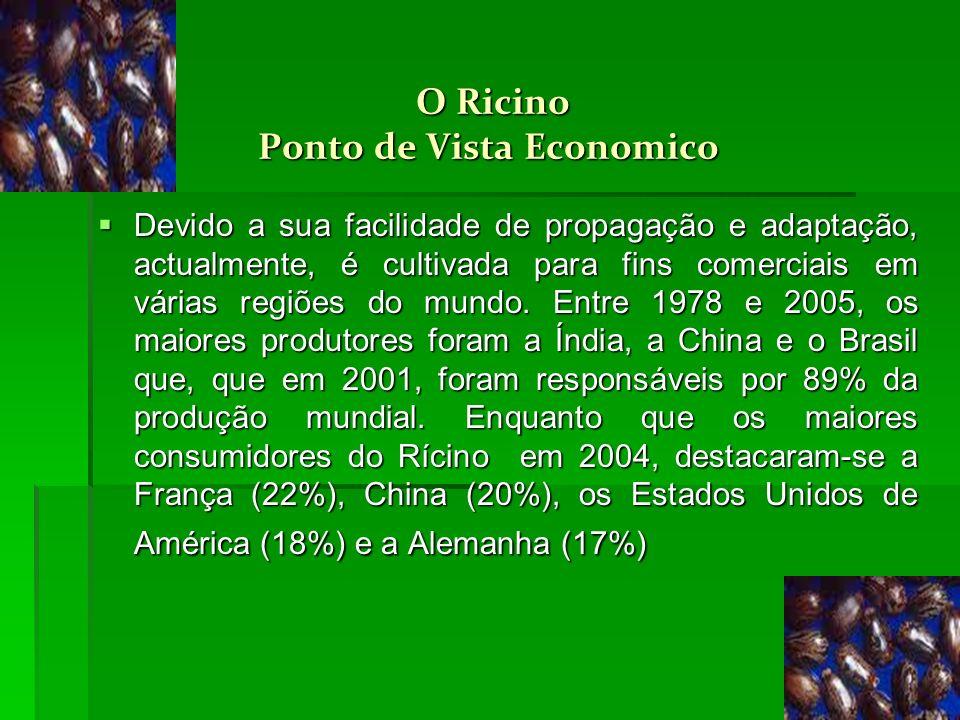 O Ricino Ponto de Vista Economico O Ricino Ponto de Vista Economico Devido a sua facilidade de propagação e adaptação, actualmente, é cultivada para f