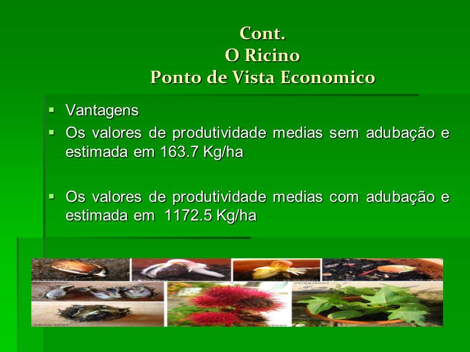 Cont. O Ricino Ponto de Vista Economico Vantagens Vantagens Os valores de produtividade medias sem adubação e estimada em 163.7 Kg/ha Os valores de pr