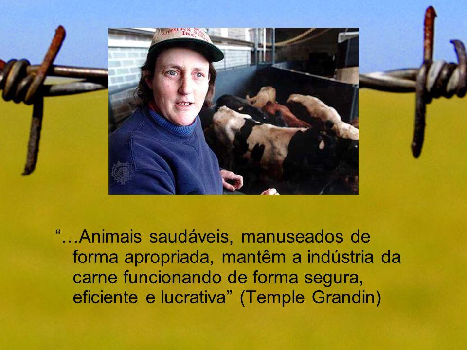 …Animais saudáveis, manuseados de forma apropriada, mantêm a indústria da carne funcionando de forma segura, eficiente e lucrativa (Temple Grandin)