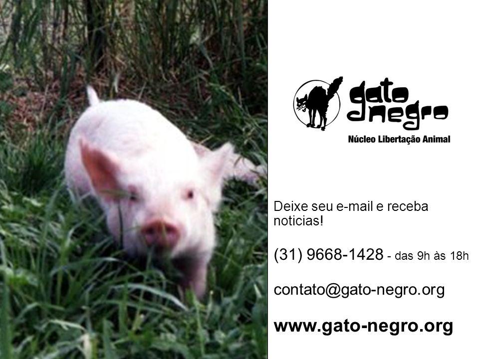 Deixe seu e-mail e receba noticias! (31) 9668-1428 - das 9h às 18h contato@gato-negro.org www.gato-negro.org