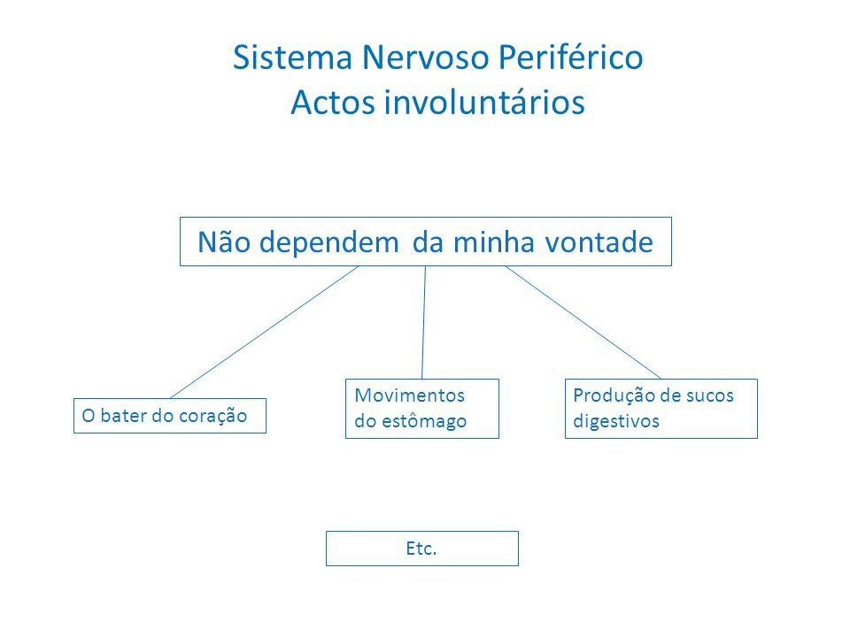Sistema Nervoso Periférico Actos involuntários Não dependem da minha vontade O bater do coração Movimentos do estômago Produção de sucos digestivos Et