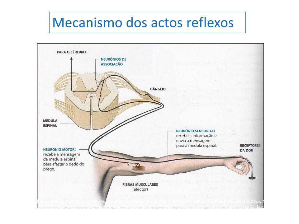 O estímulo (picar-se no prego) origina um impulso nervoso que é conduzido à espinal medula através dos nervos sensitivo. Na espinal medula passa depoi