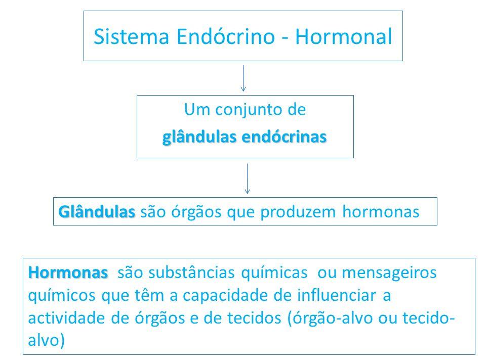 Sistema Endócrino - Hormonal Um conjunto de glândulas endócrinas Glândulas Glândulas são órgãos que produzem hormonas Hormonas Hormonas são substância