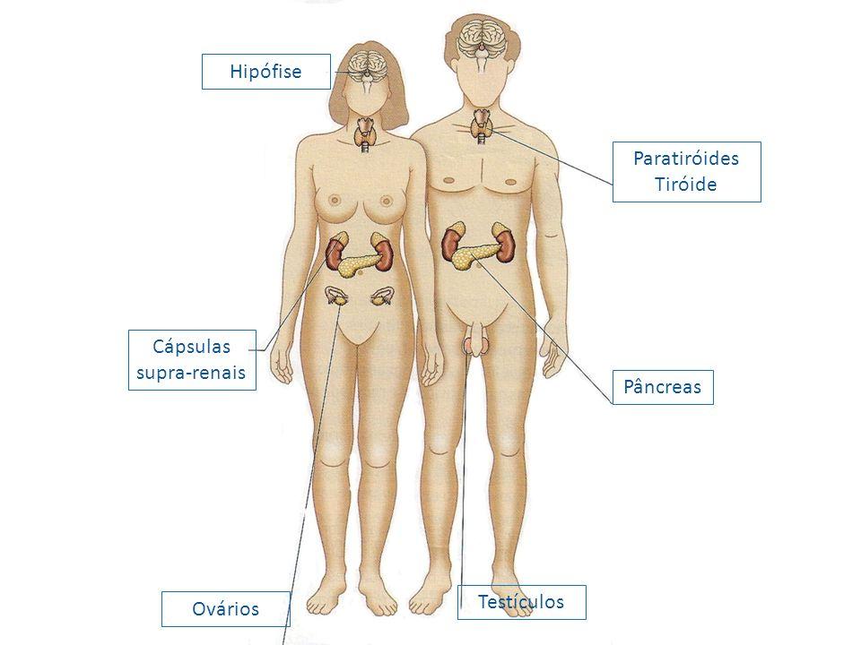 Paratiróides Tiróide Pâncreas Testículos Ovários Cápsulas supra-renais Hipófise