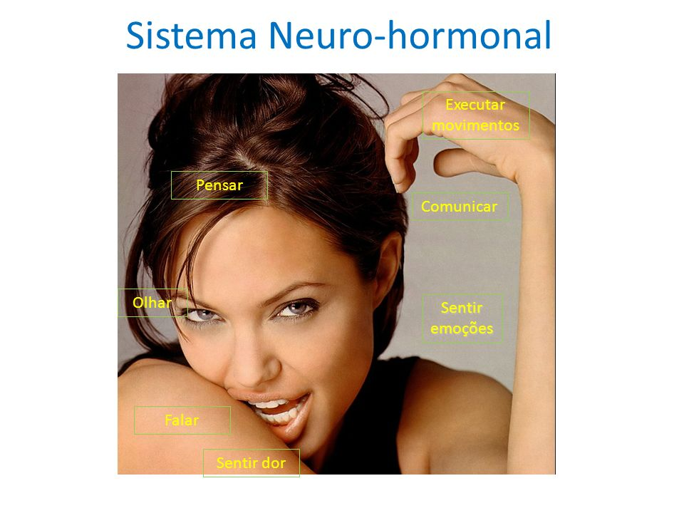 Sistema Neuro-hormonal Comunicar Sentir emoções Executar movimentos Sentir dor Olhar Pensar Falar