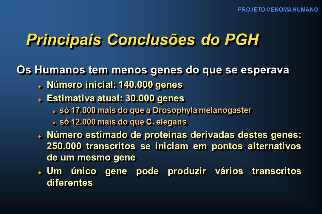 Os Humanos tem menos genes do que se esperava Os Humanos tem menos genes do que se esperava Número inicial: 140.000 genes Número inicial: 140.000 gene