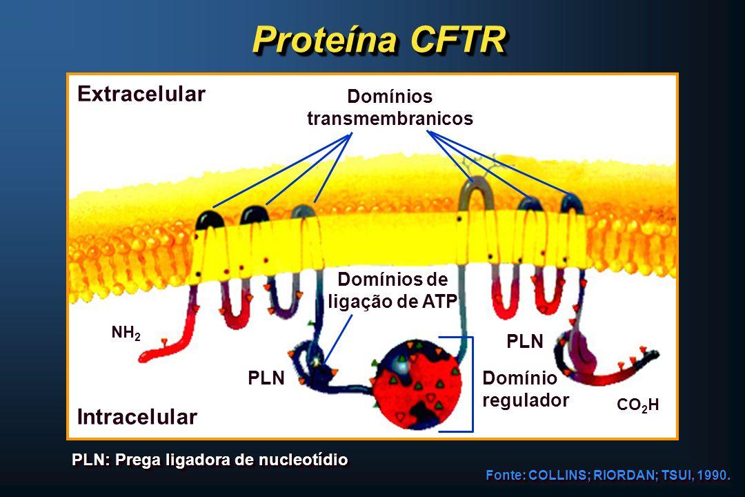 Proteína CFTR Fonte: COLLINS; RIORDAN; TSUI, 1990. PLN: Prega ligadora de nucleotídio Extracelular Intracelular NH 2 CO 2 H PLN Domínios de ligação de