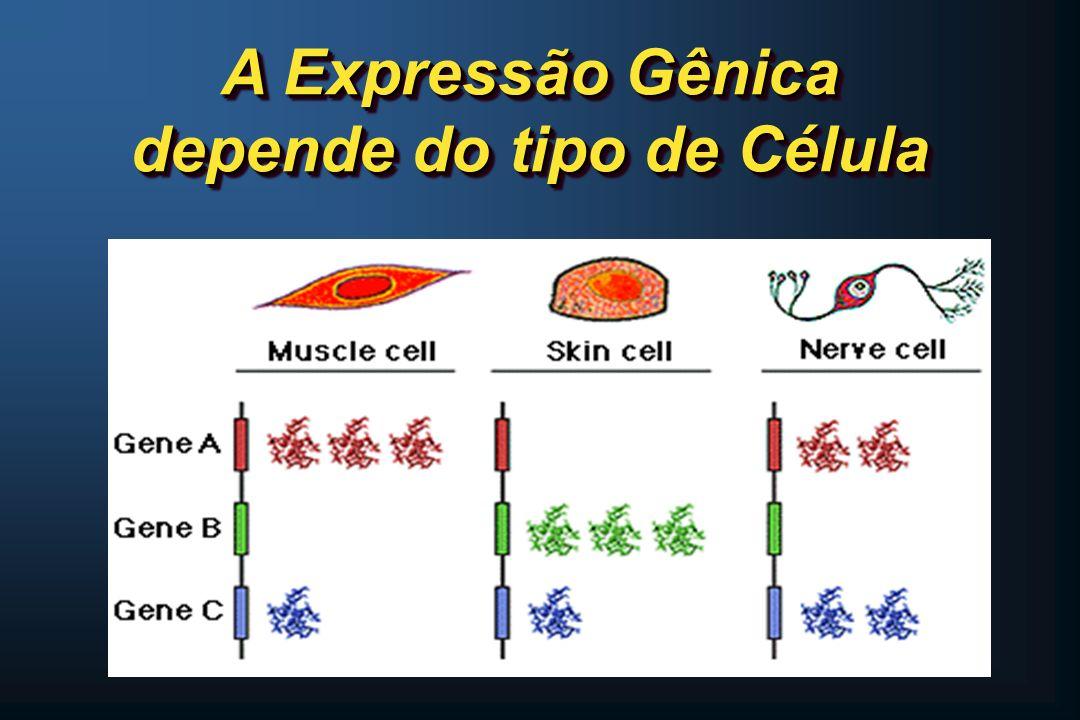 A Expressão Gênica depende do tipo de Célula