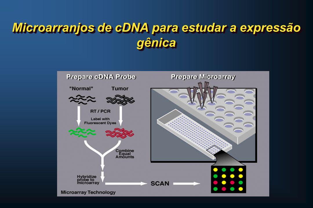 Microarranjos de cDNA para estudar a expressão gênica