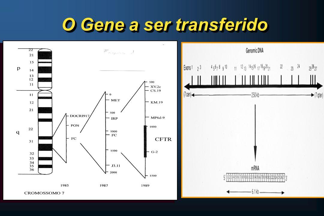 O Gene a ser transferido