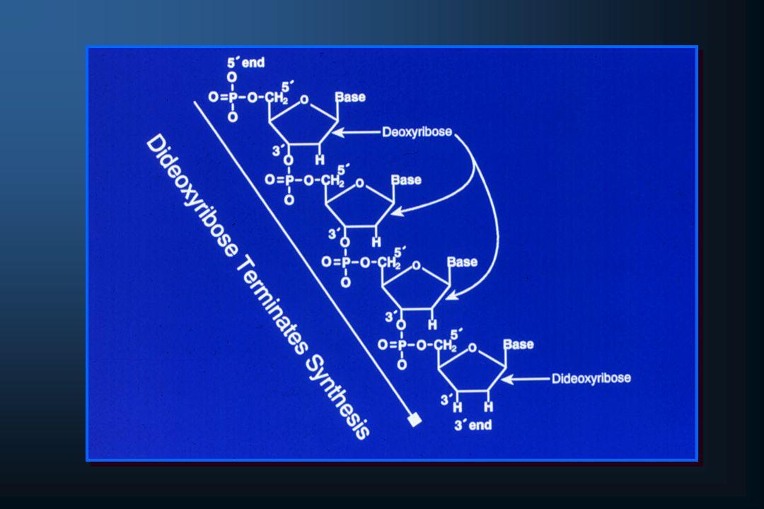 Mutação DF508 do Gene CFTR Seqüência Selvagem de Parte do Éxon 10 de CFTR DNADNAGAGAAATAATATCATCATCATCTTTTTTGGTGGTGTTGTTTCCTCC AminoácidoAminoácidoGluGluAsnAsnIleIleIleIlePhePheGlyGlyValValSerSer CódonCódon504504505505506506507507508508509509510510511511 DNADNAGAGAAATAATATCATCAT-AT---T--TGGTGGTGTTGTTTCCTCC AminoácidoAminoácidoGluGluAsnAsnIleIleIleIle GlyGlyValValSerSer Seqüência de Parte do Éxon 10 de CFTR com a Mutação DF508 CódonCódon504504505505506506507507508508509509510510511511 Fonte: GELEHRTER;COLLINS, 1990 (Adaptado).