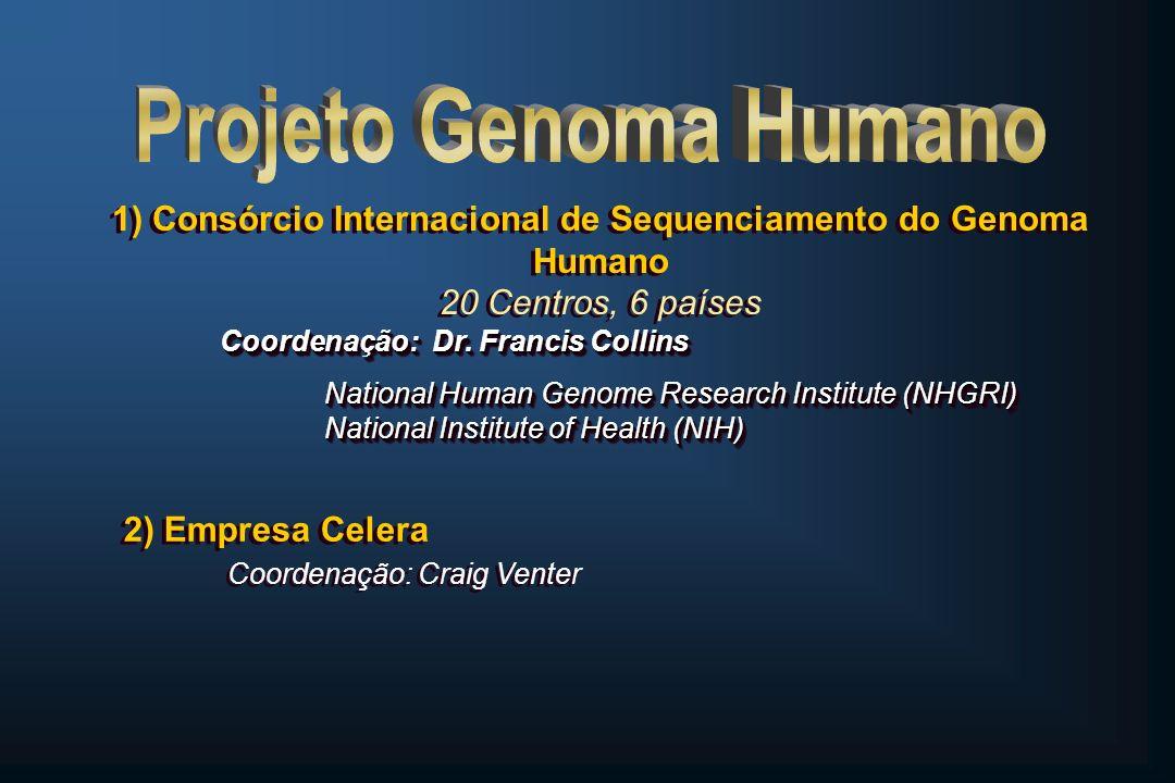 Principais Conclusões do PGH A densidade gênica é desigual, relacionada ao conteúdo de guanosina e citidina (GC) e aos padrões de bandeamento dos cromossomos A densidade gênica é desigual, relacionada ao conteúdo de guanosina e citidina (GC) e aos padrões de bandeamento dos cromossomos Cromossomo 22 é um pouco maior que o 21, mas tem o dobro de genes (545 /225) Cromossomo 22 é um pouco maior que o 21, mas tem o dobro de genes (545 /225) A densidade gênica é desigual, relacionada ao conteúdo de guanosina e citidina (GC) e aos padrões de bandeamento dos cromossomos A densidade gênica é desigual, relacionada ao conteúdo de guanosina e citidina (GC) e aos padrões de bandeamento dos cromossomos Cromossomo 22 é um pouco maior que o 21, mas tem o dobro de genes (545 /225) Cromossomo 22 é um pouco maior que o 21, mas tem o dobro de genes (545 /225) PROJETO GENOMA HUMANO