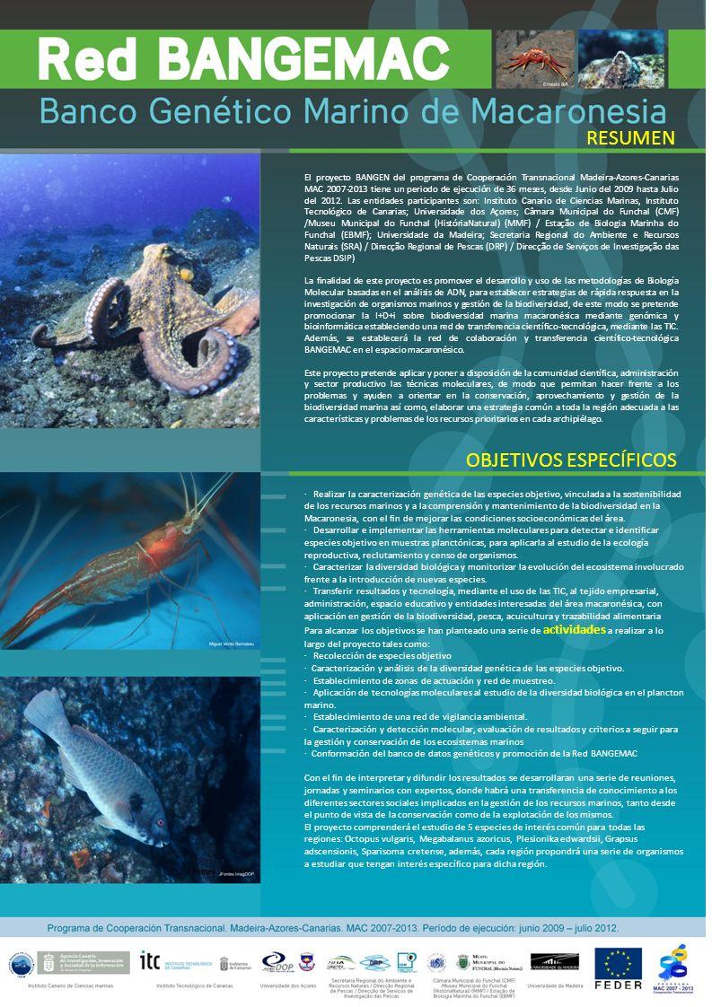 RESUMO OBJECTIVOS ESPECÍFICOS O projecto BANGEN do programa de Cooperação Transnacional Madeira-Açores-Canárias MAC 2007-2013 tem um período de execução de 36 meses, desde Junho de 2009 até Julho de 2012.