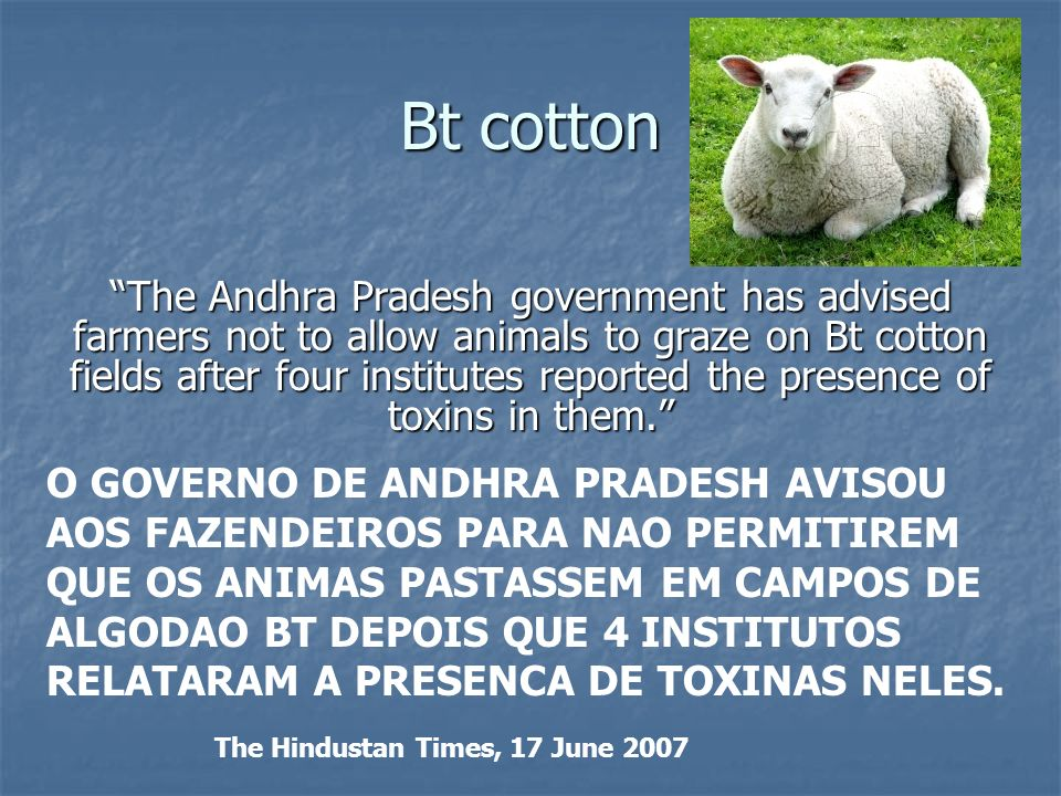 Bt cotton The Andhra Pradesh government has advised farmers not to allow animals to graze on Bt cotton fields after four institutes reported the prese
