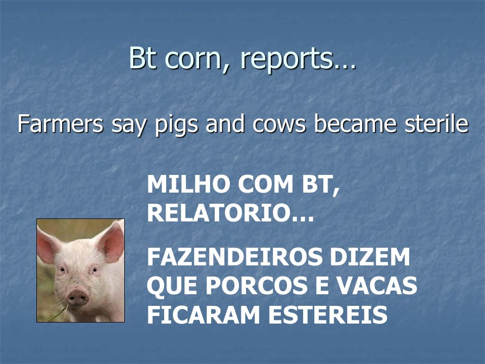 Bt corn, reports… Inhaled pollen may have caused illness MILHO COM BT, RELATORIO… POLEN INALADO PODE PROVOCAR DOENCAS
