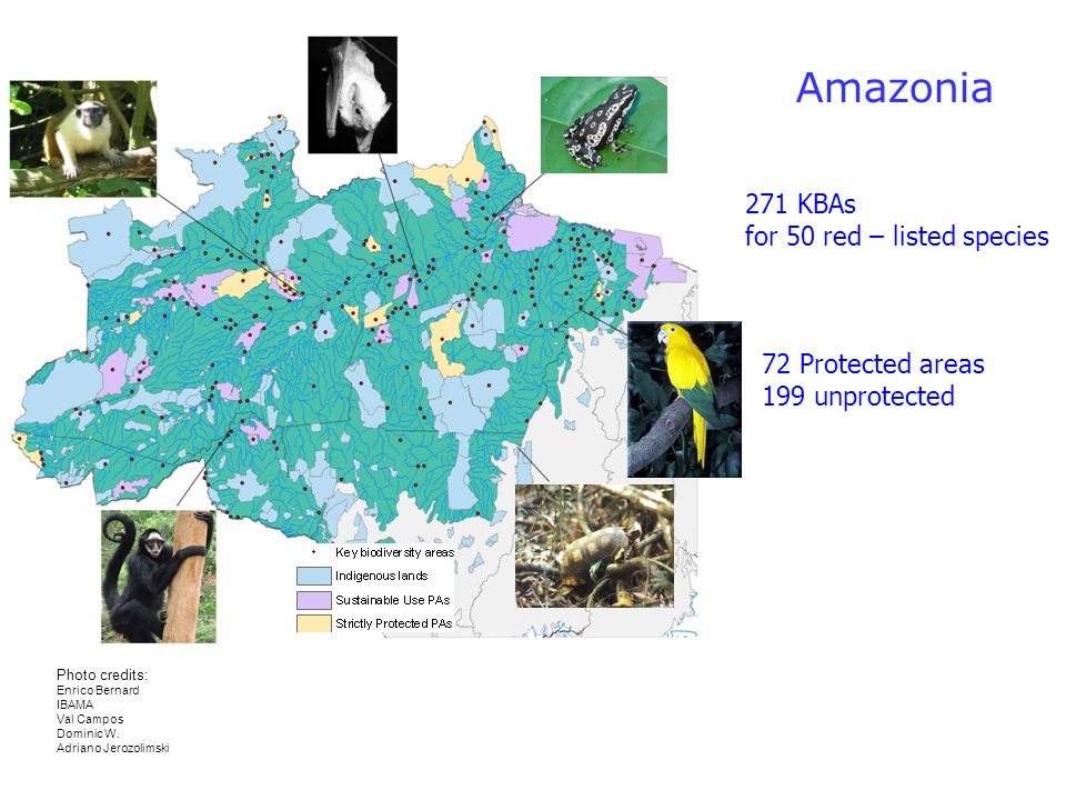 Pantanal 43 KBAs for 17 red – listed species 6 KBAs are Protected Areas 37 unprotected