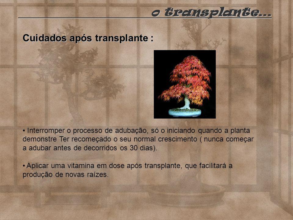 Cuidados após transplante : Interromper o processo de adubação, só o iniciando quando a planta demonstre Ter recomeçado o seu normal crescimento ( nun