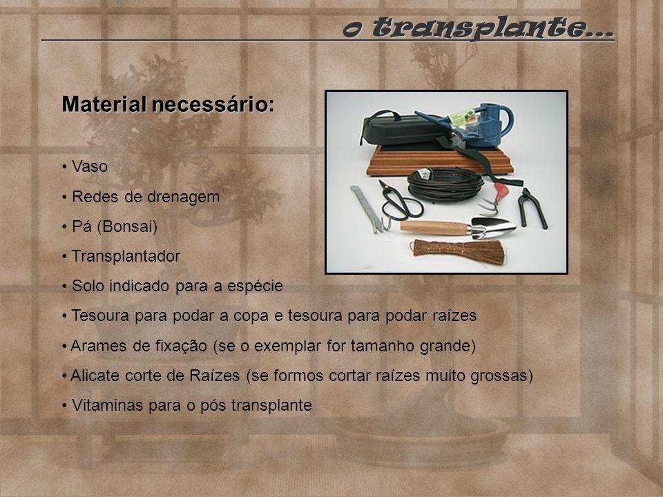 o transplante… o transplante… Material necessário: Vaso Redes de drenagem Pá (Bonsai) Transplantador Solo indicado para a espécie Tesoura para podar a