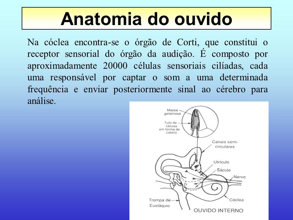 16 Sistema Auditivo Humano Ouvido externo Ouvido médio Ouvido interno Energia Sonora Energia mecânica Energia nervosa