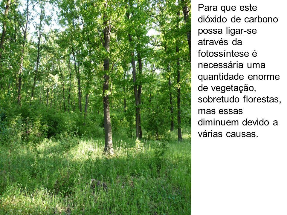 Para que este dióxido de carbono possa ligar-se através da fotossíntese é necessária uma quantidade enorme de vegetação, sobretudo florestas, mas essa