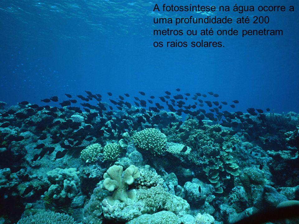 A fotossíntese na água ocorre a uma profundidade até 200 metros ou até onde penetram os raios solares.