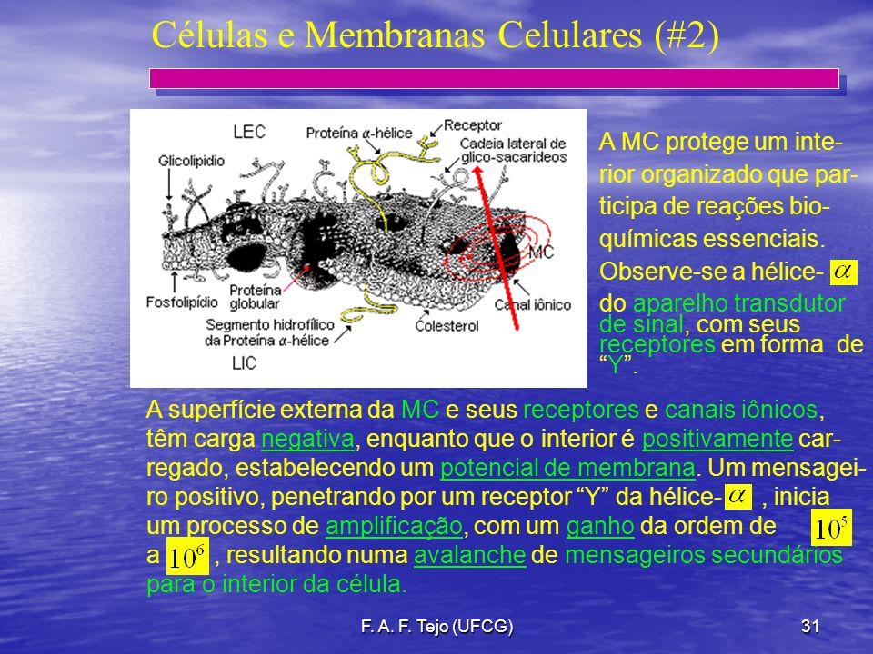 F. A. F. Tejo (UFCG)31 Células e Membranas Celulares (#2) A MC protege um inte- rior organizado que par- ticipa de reações bio- químicas essenciais. O
