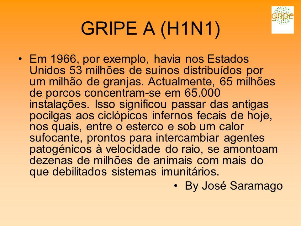GRIPE A (H1N1) Em 1966, por exemplo, havia nos Estados Unidos 53 milhões de suínos distribuídos por um milhão de granjas. Actualmente, 65 milhões de p