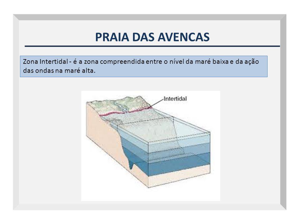 PRAIA DAS AVENCAS Zona Intertidal - é a zona compreendida entre o nível da maré baixa e da ação das ondas na maré alta.