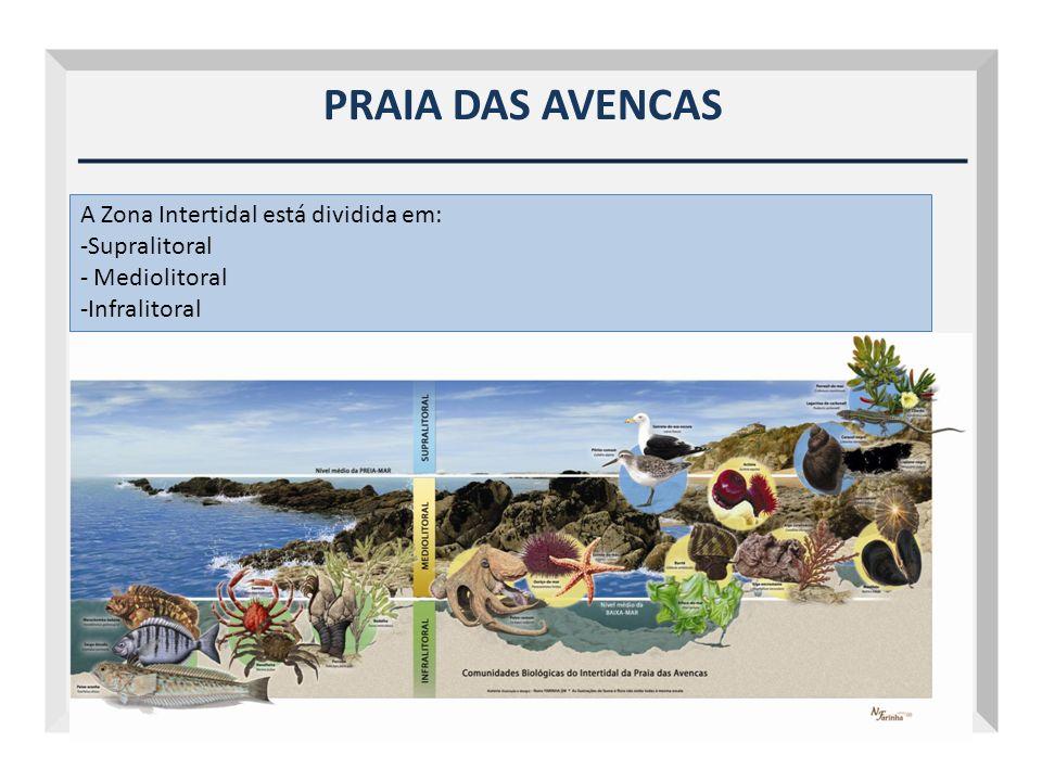 PRAIA DAS AVENCAS A Zona Intertidal está dividida em: -Supralitoral - Mediolitoral -Infralitoral