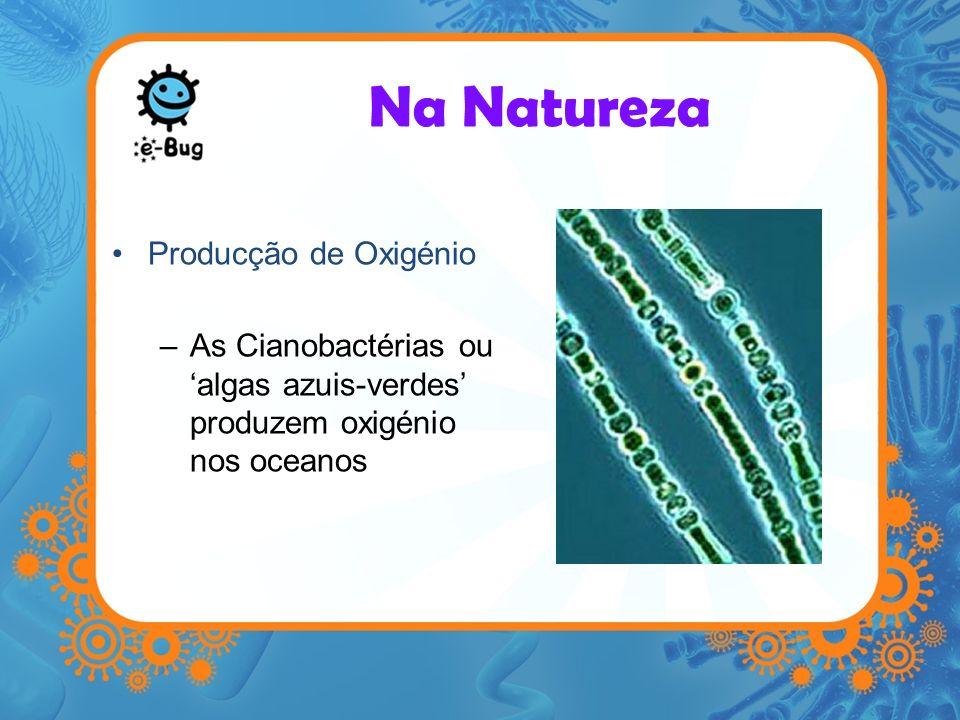 Producção de Oxigénio –As Cianobactérias ou algas azuis-verdes produzem oxigénio nos oceanos Na Natureza