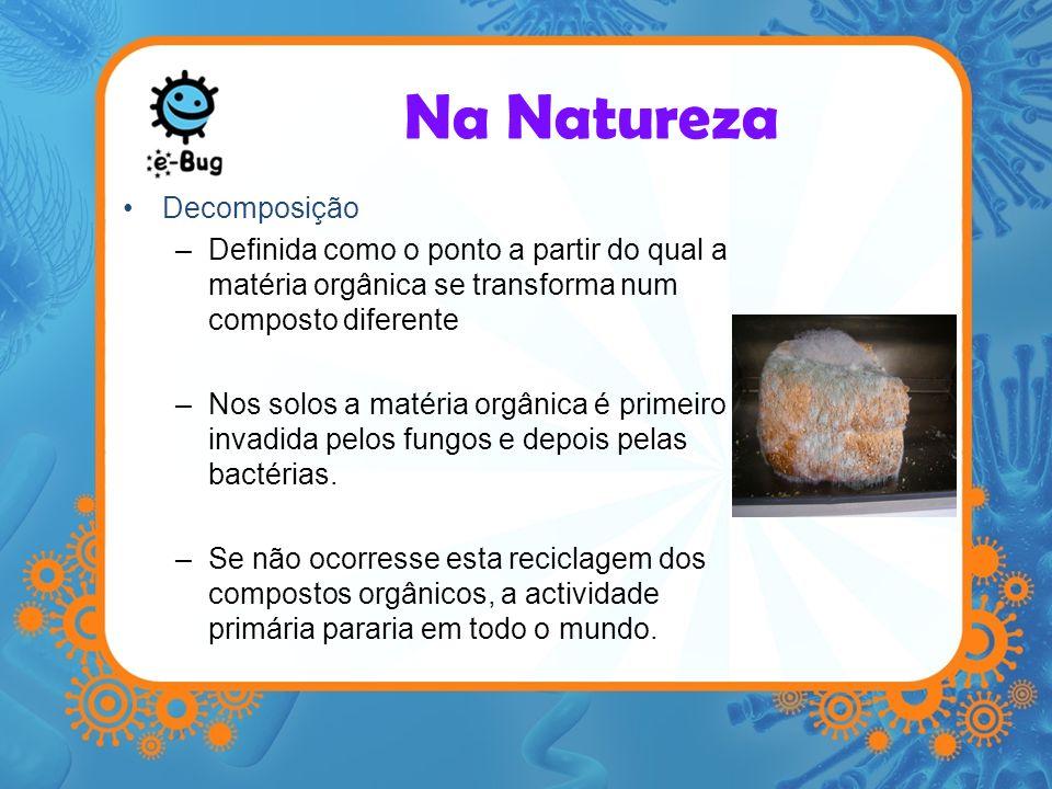 Decomposição –Definida como o ponto a partir do qual a matéria orgânica se transforma num composto diferente –Nos solos a matéria orgânica é primeiro