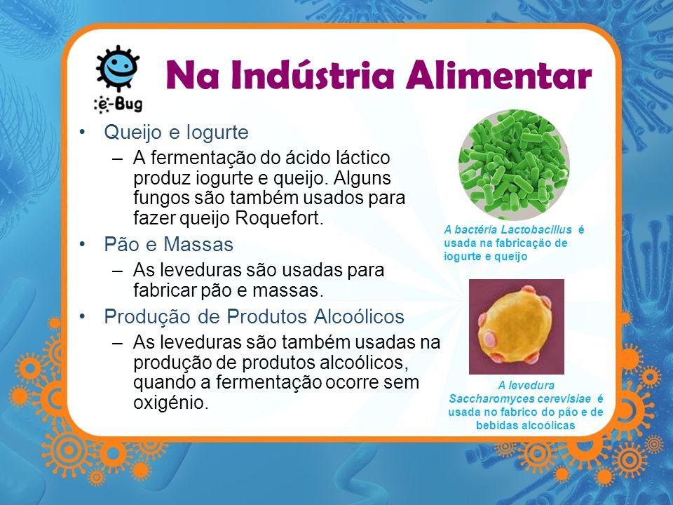 Na Indústria Alimentar Queijo e Iogurte –A fermentação do ácido láctico produz iogurte e queijo. Alguns fungos são também usados para fazer queijo Roq