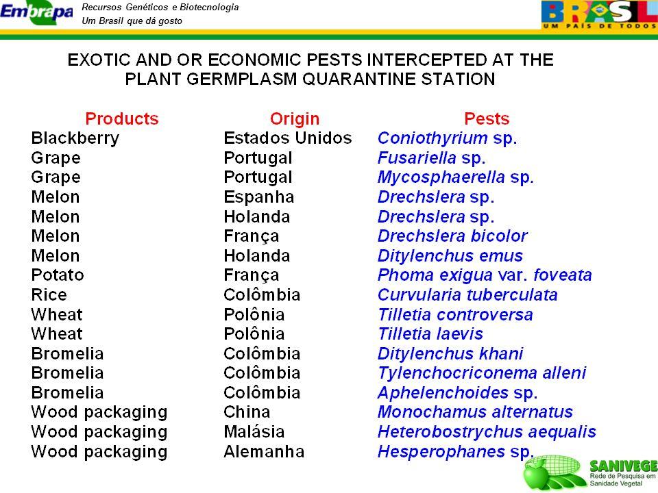 Recursos Genéticos e Biotecnologia Um Brasil que dá gosto