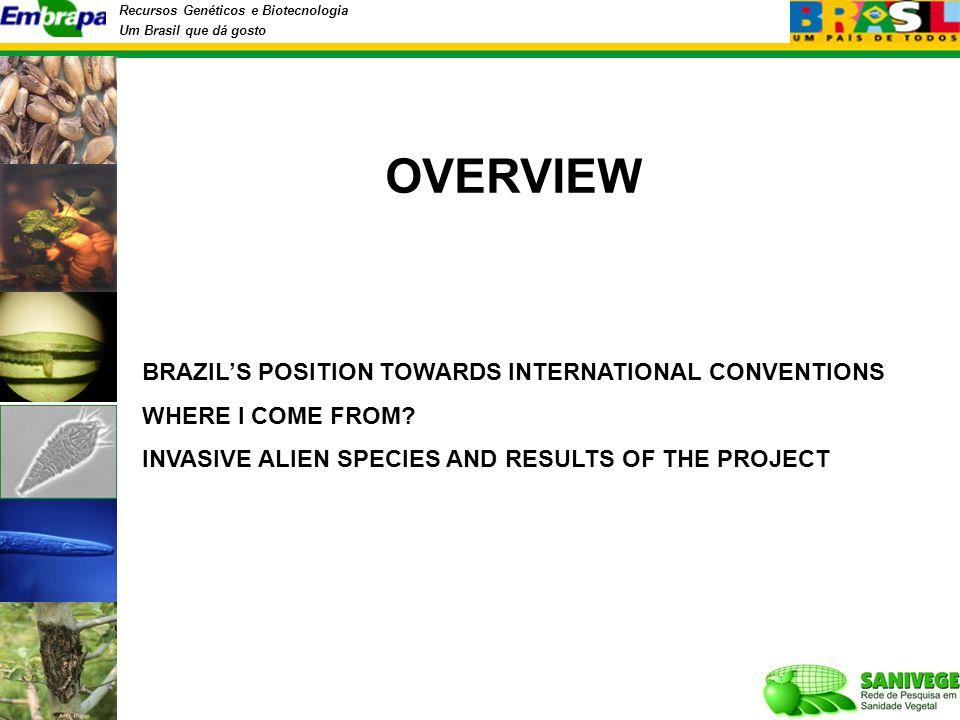 Recursos Genéticos e Biotecnologia Um Brasil que dá gosto OVERVIEW BRAZILS POSITION TOWARDS INTERNATIONAL CONVENTIONS WHERE I COME FROM? INVASIVE ALIE