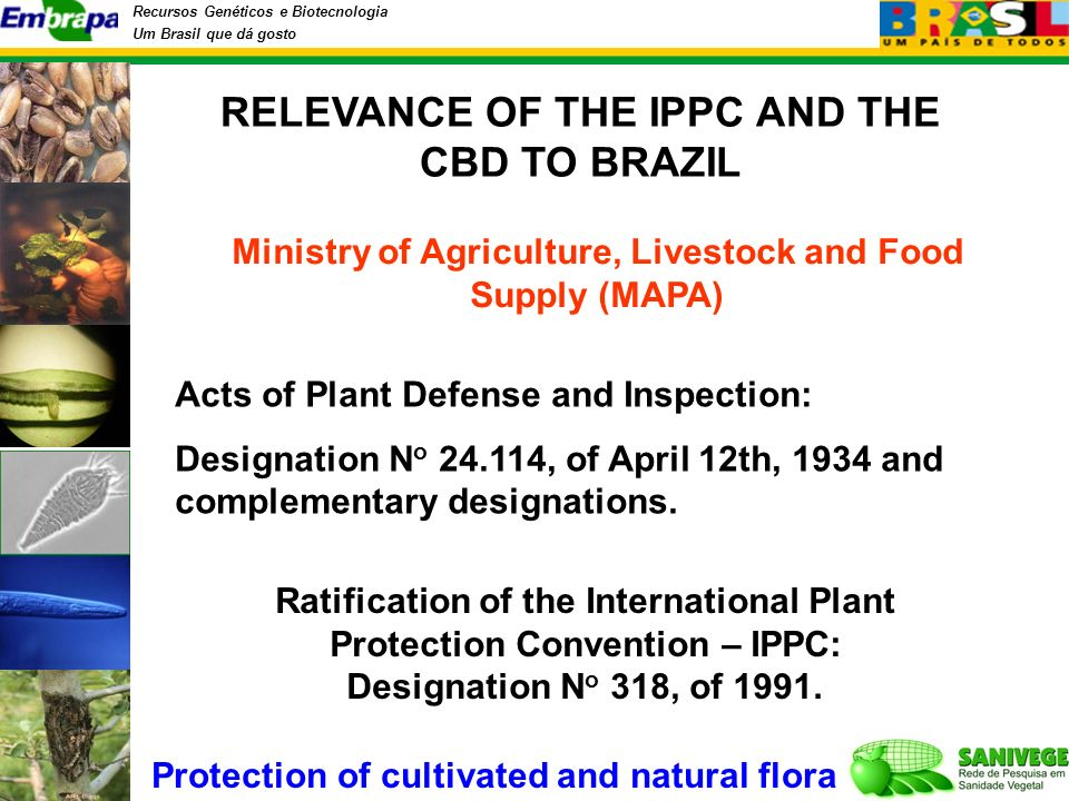 Recursos Genéticos e Biotecnologia Um Brasil que dá gosto Acts of Plant Defense and Inspection: Designation N o 24.114, of April 12th, 1934 and complementary designations.