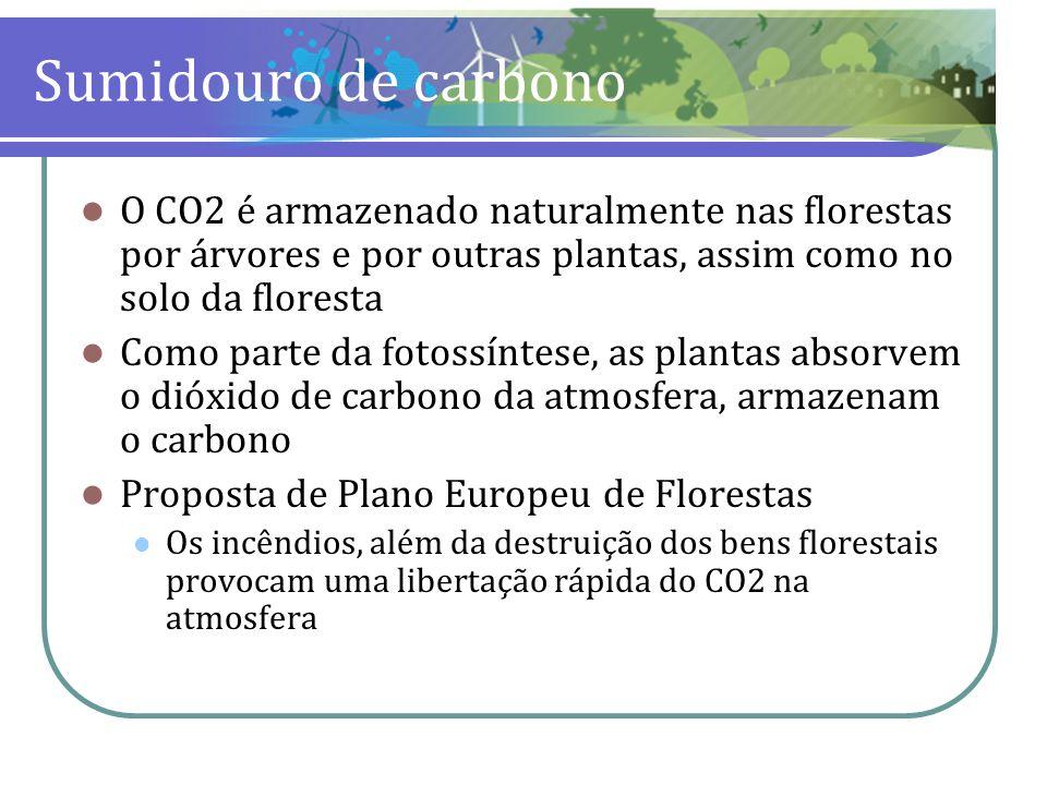 Sumidouro de carbono O CO2 é armazenado naturalmente nas florestas por árvores e por outras plantas, assim como no solo da floresta Como parte da foto