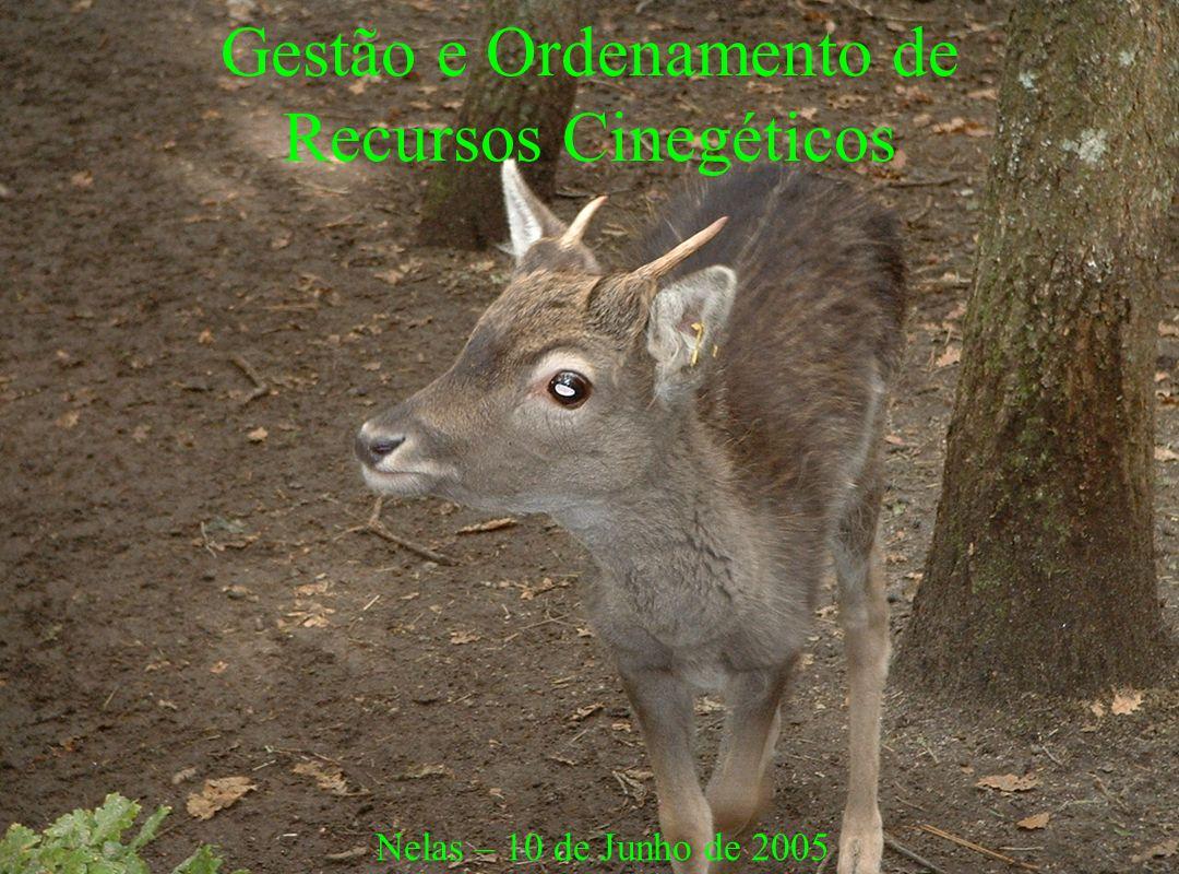 Nelas 10-06-05Eng.Paulo Casais22 Caçadores Qual o seu papel no OC.