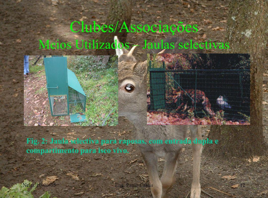 Nelas 10-06-05Eng. Paulo Casais12 Clubes/Associações Meios Utilizados – Jaulas selectivas Fig. 2: Jaula selectiva para raposas, com entrada dupla e co