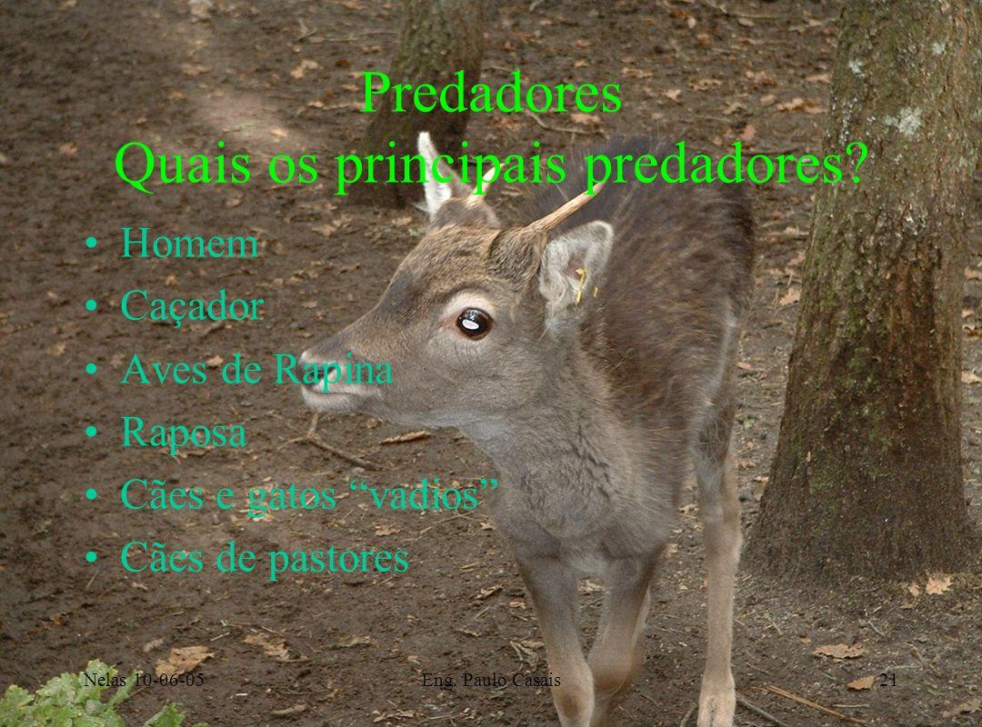 Nelas 10-06-05Eng. Paulo Casais21 Predadores Quais os principais predadores? Homem Caçador Aves de Rapina Raposa Cães e gatos vadios Cães de pastores