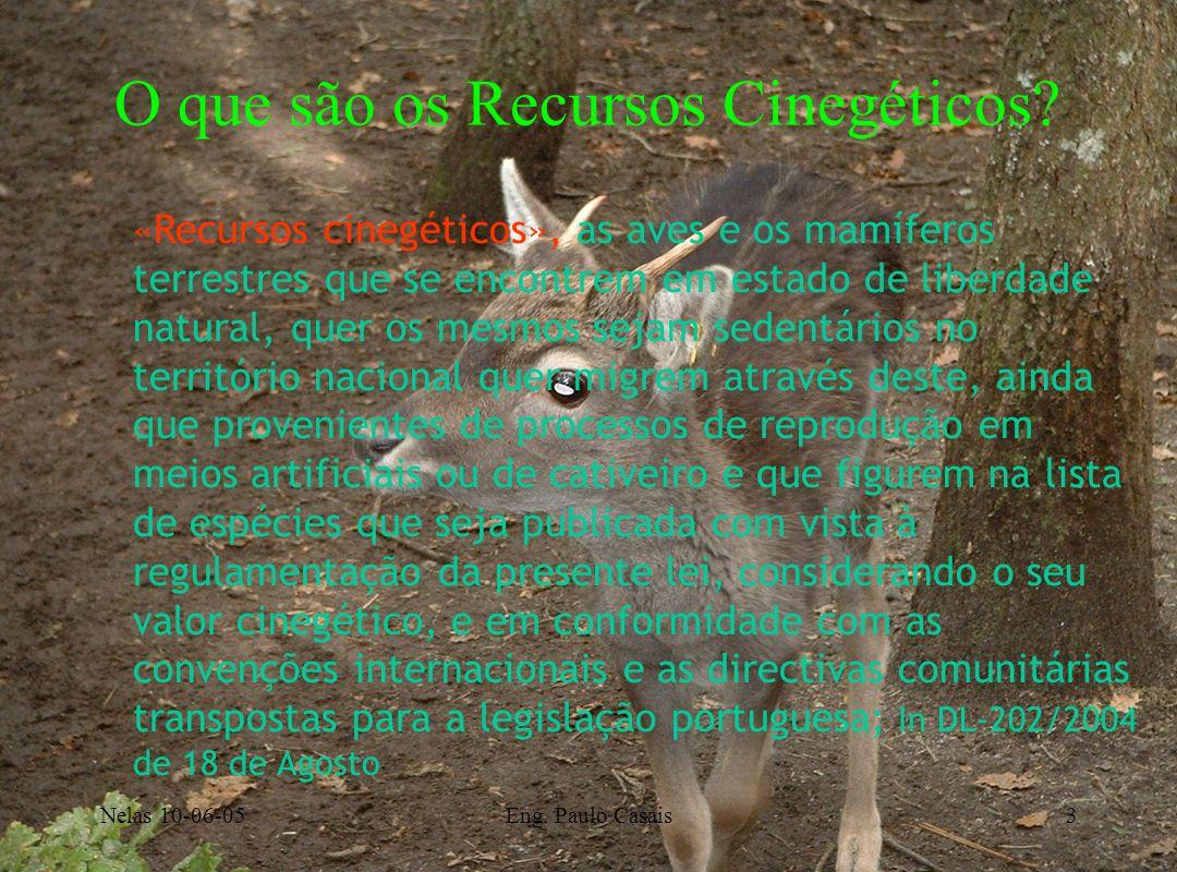Nelas 10-06-05Eng. Paulo Casais3 O que são os Recursos Cinegéticos? «Recursos cinegéticos», as aves e os mamíferos terrestres que se encontrem em esta
