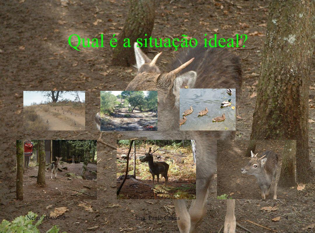 Nelas 10-06-05Eng. Paulo Casais4 Qual é a situação ideal?
